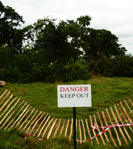 Danger sign by a lightning-stricken tree in Windsor Great Park, Berkshire, 2008